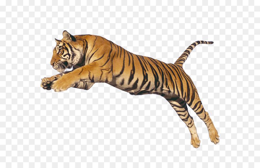 Singa, Kucing, Macan Tutul gambar png