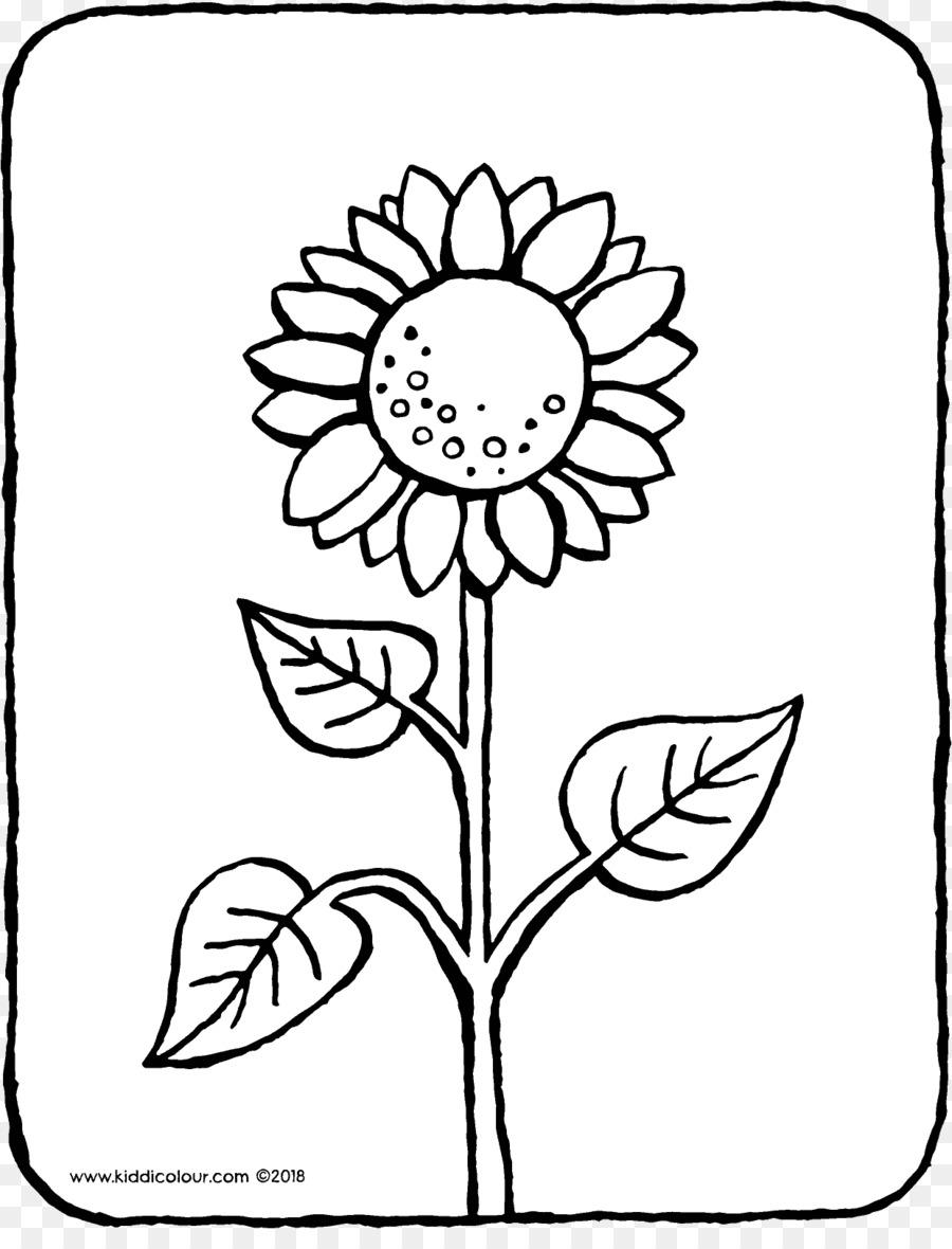 Umum Bunga Matahari Buku Mewarnai Halaman Mewarnai Gambar Png