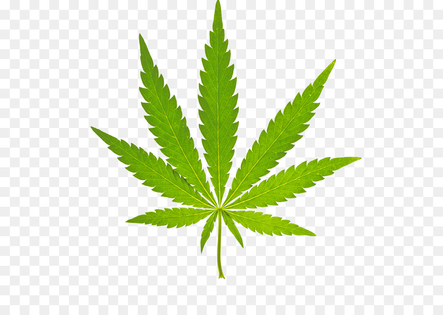 ganja cannabis sativa ganja medis gambar png ganja cannabis sativa ganja medis