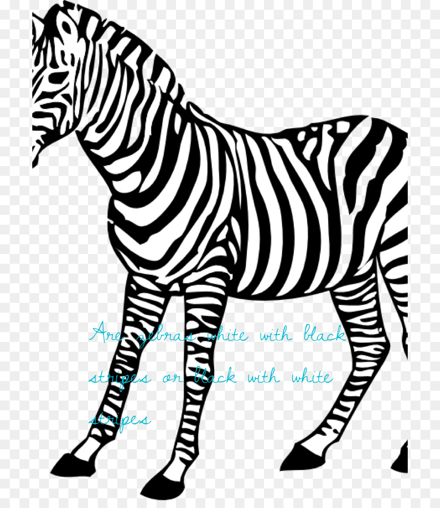 Bayi Zebra Buku Mewarnai Zebra Gambar Png
