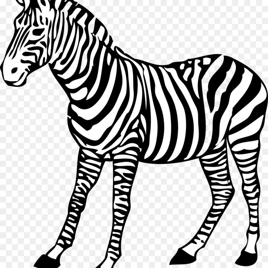 Buku Mewarnai Halaman Mewarnai Bayi Zebra Gambar Png