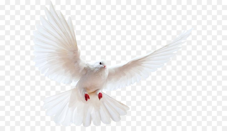 84  Gambar Burung Merpati Png  Terbaru Gratis
