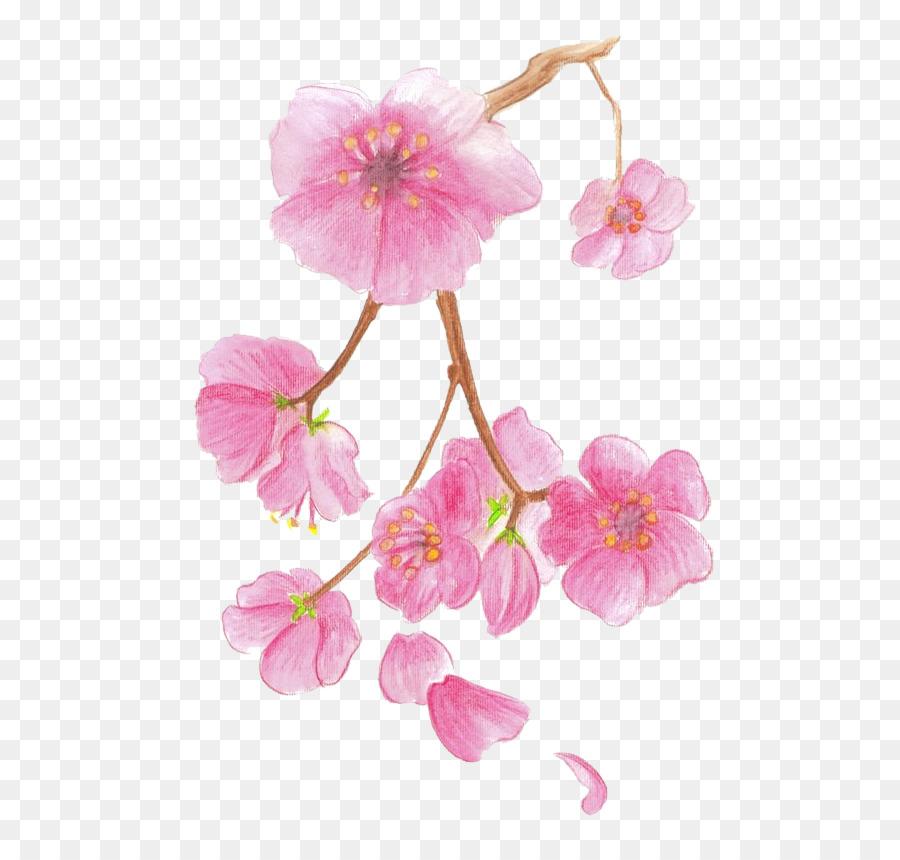 Download 1060+ Gambar Bunga Sakura Mewarnai Gratis Terbaru
