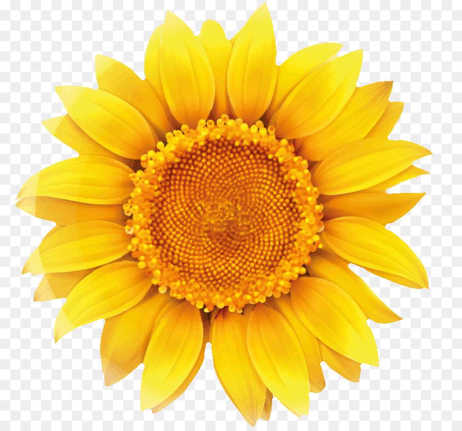 200 Gambar Bunga Matahari Vektor Gratis Infobaru