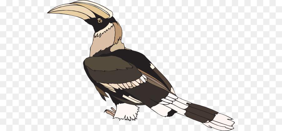 Burung Burung Enggang Utara Redbilled Enggang Gambar Png