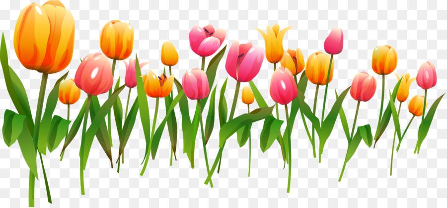 Tulip Bingkai Foto Desain Bunga Gambar Png