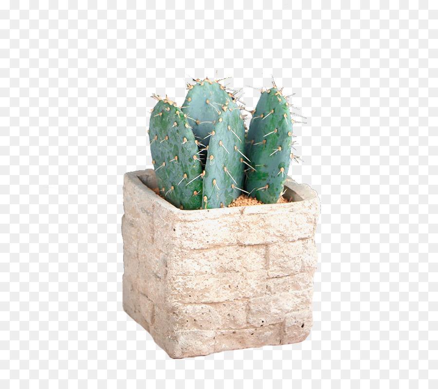 Unduh 4200 Koleksi Wallpaper Bunga Kaktus Paling Keren