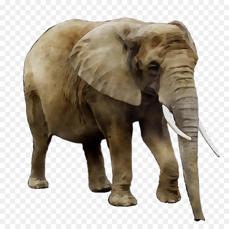 Gajah Asia Gajah Afrika Bush Singa Gambar Png