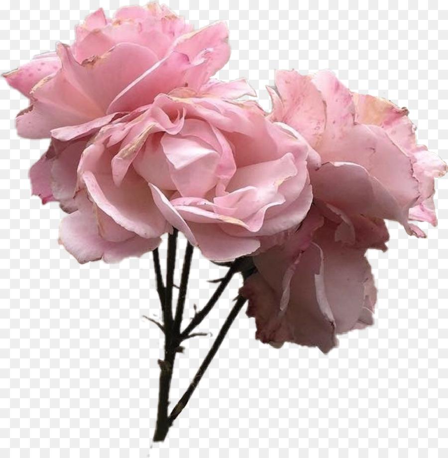Estetika Pink Abu Abu Gambar Png